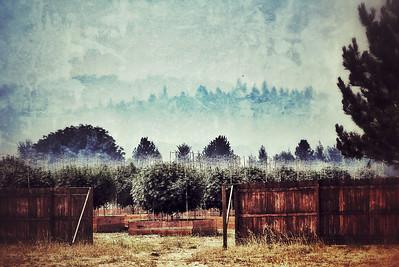 Northern California, Summer 2012