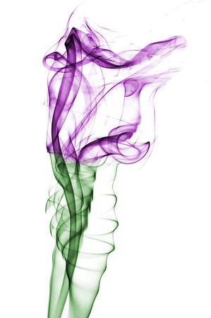 Purple Smoke Tulip , Cottage Grove fine art photographer and photography