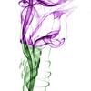 Purple Smoke Tulip , Cottage Grove fine art photographer and photography
