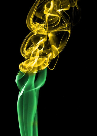 Yellow Smoke Flower , Cottage Grove fine art photographer and photography
