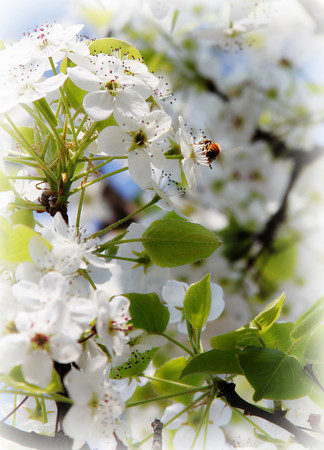 A Sign of Spring_5708064478_o