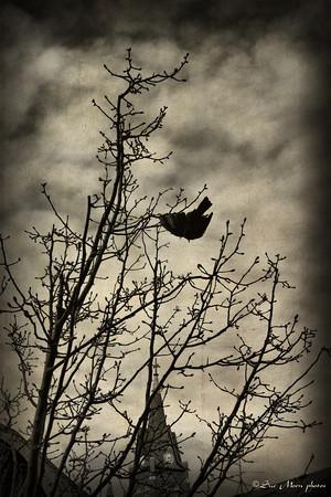 Nevermore_5635384956_o