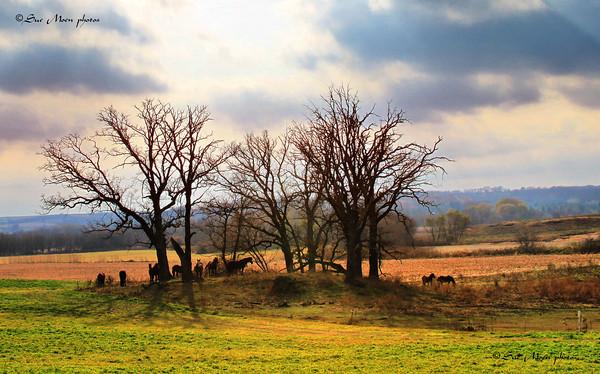 Autumn Pasture_5108950359_o