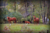 Horses & Friends watching_5043048082_o