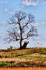 Lone Tree in Autumn_5043046496_o