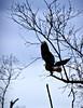 Eagle_9256