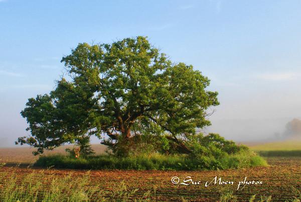 AM Tree_4685451711_o