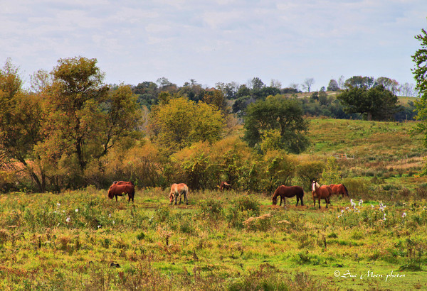 The horses were enjoying the warm sun and their pasture on a beautiful afternoon.