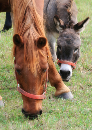 Horse & Friend have snack_4038703126_o