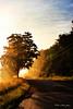 Down the Road to Meet the Dawn_5510703872_o