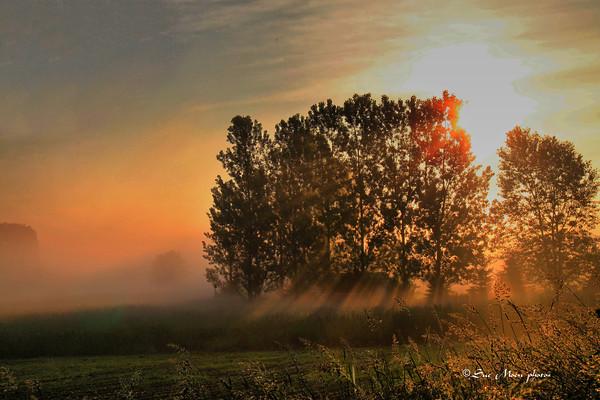 Golden sunrise_4685453951_o
