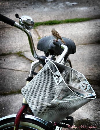 A small brown sparrow sitting on a bicycle just waiting for a ride.