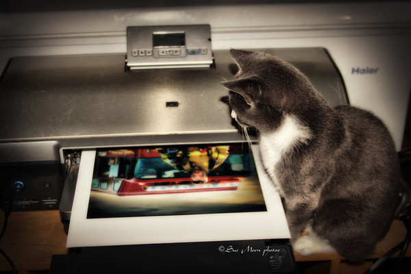 Elmer likes to supervise my photo printing.