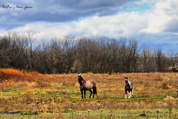 The two stood together watching the traffic that went by their pasture