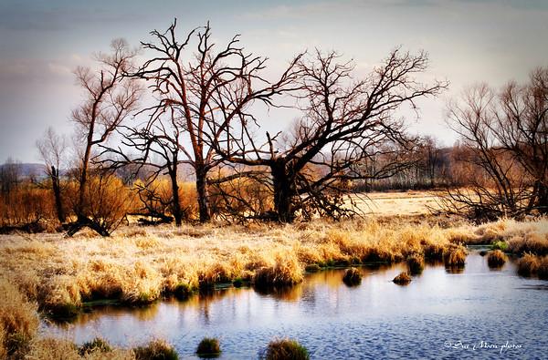 Wetlands_2008