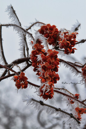 Frost_2629