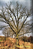 The tree was starkly bare,  the weeds  in  the pasture was brown, in the path of the incoming late fall storm.