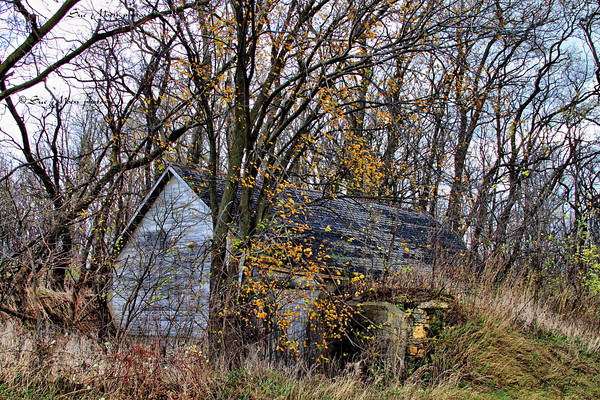 The old shed sits right next to the road, overgrown and overlooked.