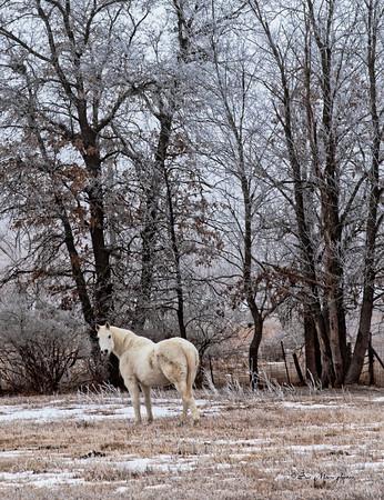 Frosty Horse_2553