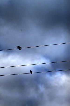 bird_9951