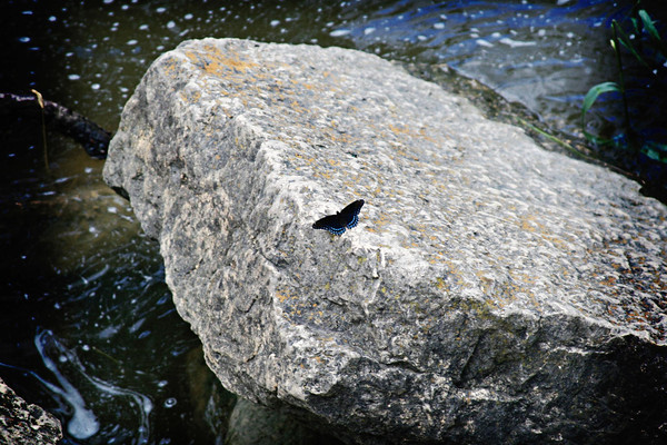 Butterfly at Yellowstone State Park_4035561234_o