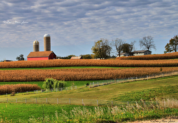 Wisconsin Harvest_5214728583_o