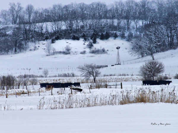 Home On the Frozen Range_5439861257_o