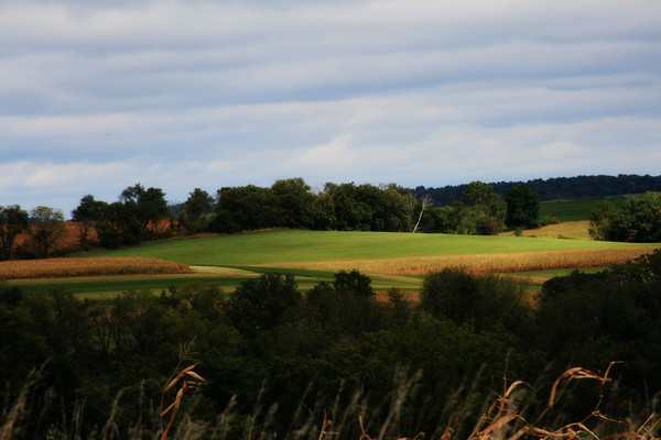 Fields and trees west of New Glarus