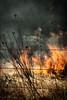 grassfire_1909