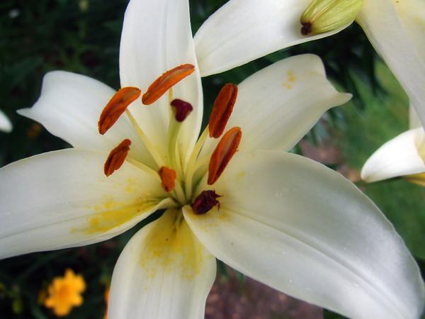 White Flower_4024057155_o