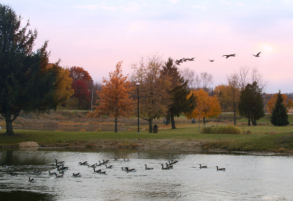 Geese on Lake Montesian in Monticello