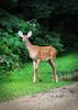 Bambi_7322