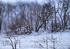 Winter Woods_5313724835_o