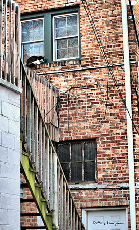The black and white cat lay in the window of the second story apartment waiting for someone to let him in.