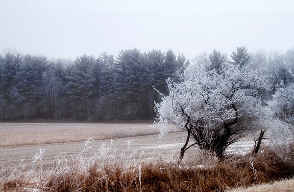 frost_2544