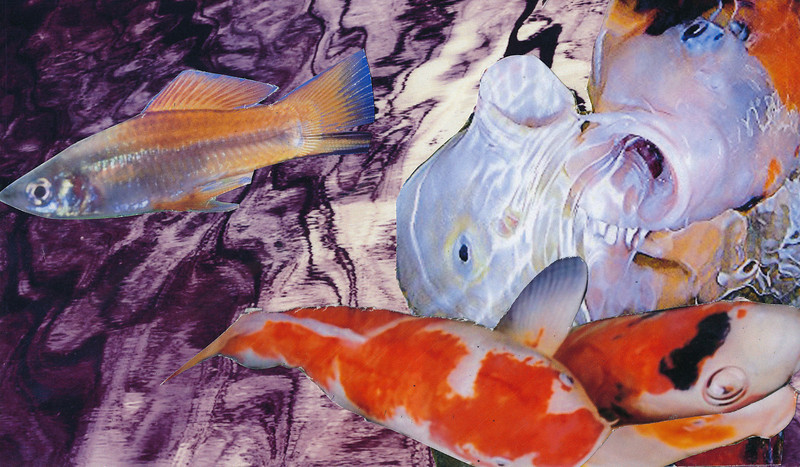 Goldfish Dream Images. Dream Suit.<br /> <br /> I am the one who is trying to escape, who is moving away from toxic overwhelming presence.