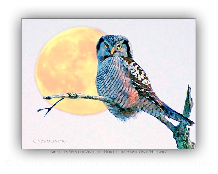 Hawk Owl and Moon