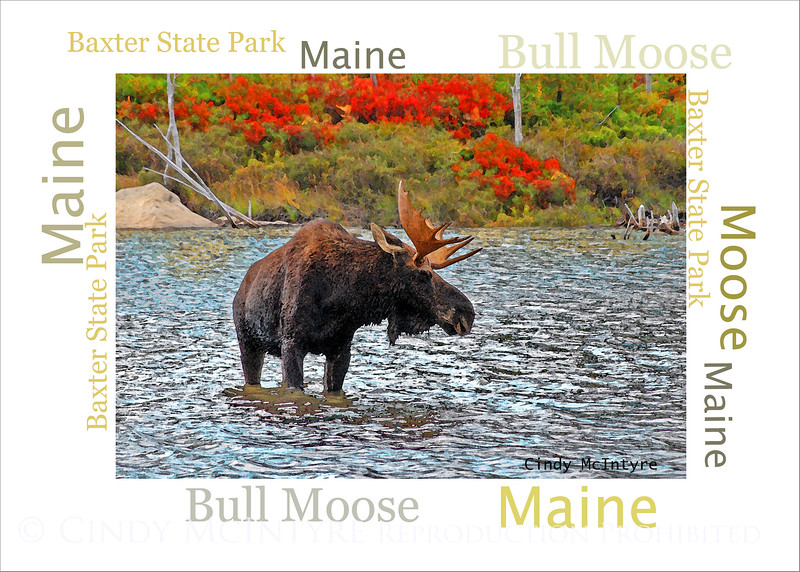 Bull Moose WordArt
