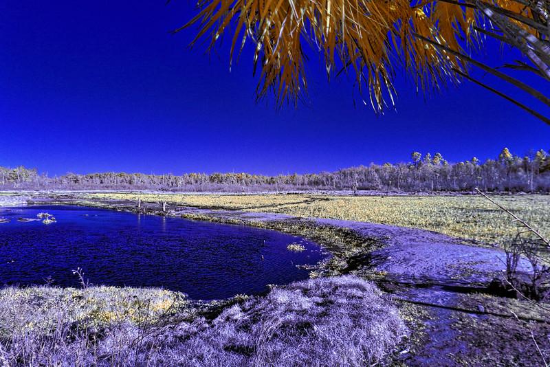 Ocklawaha River in Infrared