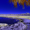 Ocklawaha River in Infrared
