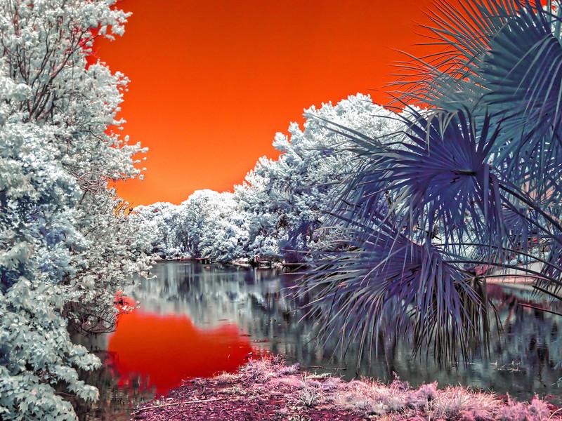 Atlantic Beach Florida Creek in Infrared
