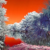 Atlantic Beach Florida Creek in Infrared