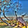 Green Cove Springs