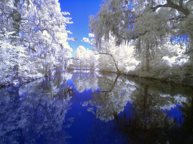 Magnolia Plantation