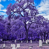 Melrose Cemetery in Infrared