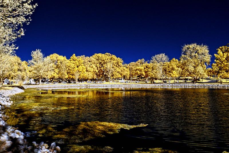 Cycadia Cemetery Lake in Tarpon Springs