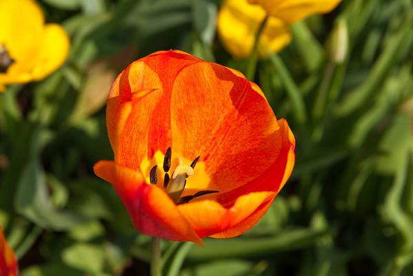 SpringFlowers-28.jpg