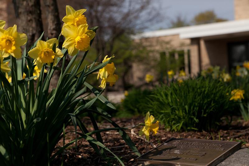 SpringFlowers-1.jpg