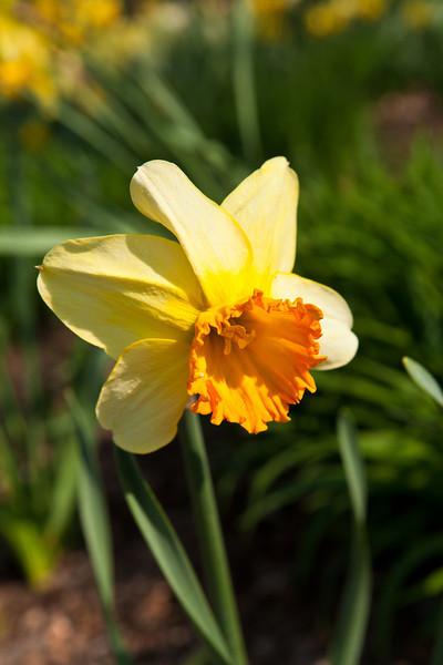 SpringFlowers-11.jpg