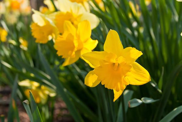 SpringFlowers-21.jpg